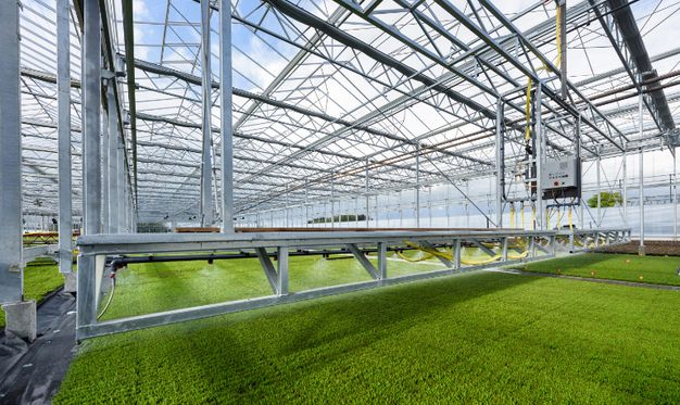 Venlo greenhouse, greenhouses with a canopy construction